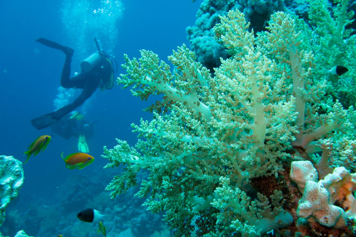 Diving a Ischia