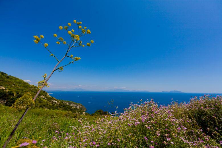 Week-End di Primavera ad Ischia